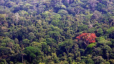 Déforestation : le Gabon, 1er pays africain récompensé pour ses efforts