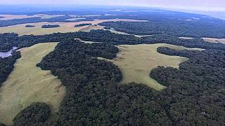 Gabon to be first African nation to receive funding to protect its forest