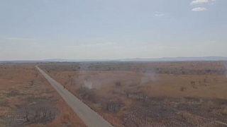 Madagascar : la Biodiversité menacée par les flammes