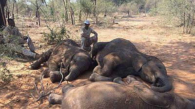 Starvation kills 55 elephants in Zimbabwe's biggest park