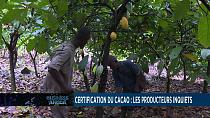 African producers worry over new cocoa certification[Business Africa]
