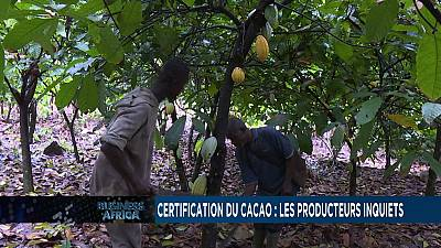 Certification du cacao : les producteurs inquiets [Business Africa]