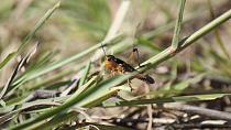 Insect concerns: Ethiopia battles locusts, Malawi fights tsetse flies