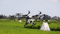 Researchers pilot drone spraying to combat malaria in Zanzibar