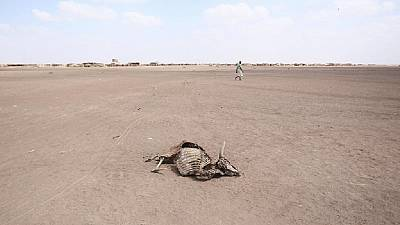 Southern Africa drought threatens estimated 45 million people