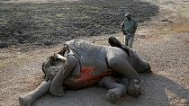 Zimbabwe loses over 200 elephants to drought, mass wildlife transfer planned