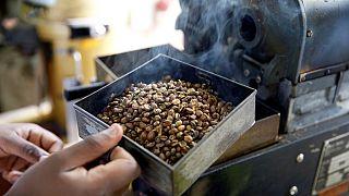 Les caféiculteurs kényans dos au mur