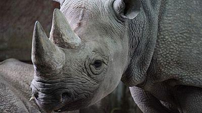 Tanzanie : la doyenne des rhinos noirs, morte à 57 ans