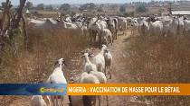 Nigeria's mass livestock vaccination exercise [Grand Angle]