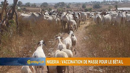 Nigeria : vaccination de masse pour le bétail [Grand Angle]