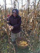 Fields of corn in Moldova.