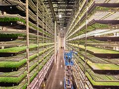 A vertical farming facility in Newark, New Jersey, United States, produces fresh vegetables in a way that uses 5% of the water normally needed in an outdoor field