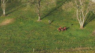 Farm to Fork - Pesticides France
