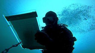 Ocean - Biodiversity