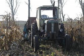 Fields of corn, Moldova.