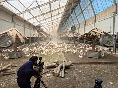 Happy hens: Camera-operator Martin Egter van Wissekerke filming at sustainable chicken farm in the Netherlands (Kipster)