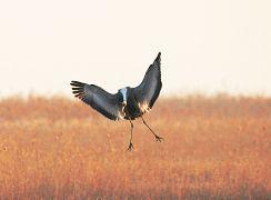 Migratory bird sanctuaries, China