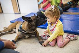 Zen, a hatéves malinois fajtájú vizsgázott terápiás és mentőkutya sajátos nevelési igényű gyerekek kutyaterápiás foglalkozásán a kőbányai Fecskefészek Bölcsődében