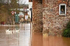A woman looks out of her window as geese swim past in floodwater after the River Severn bursts it's banks in Bewdley, west of Birmingham.