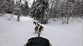 Climate Now | Sled dog