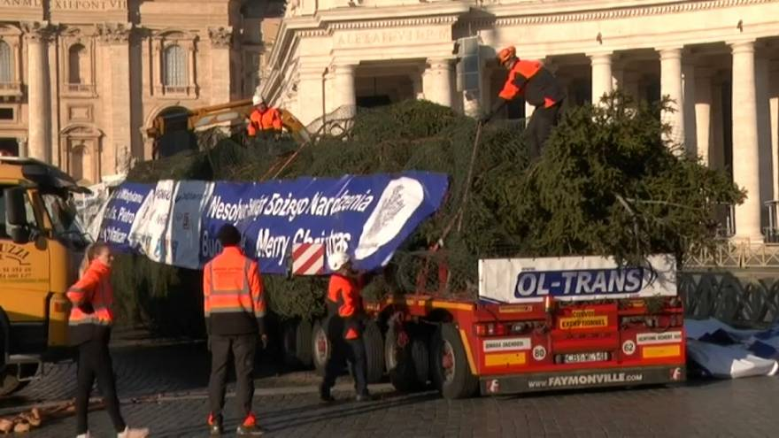 Christmas tree delivery at The Vatican