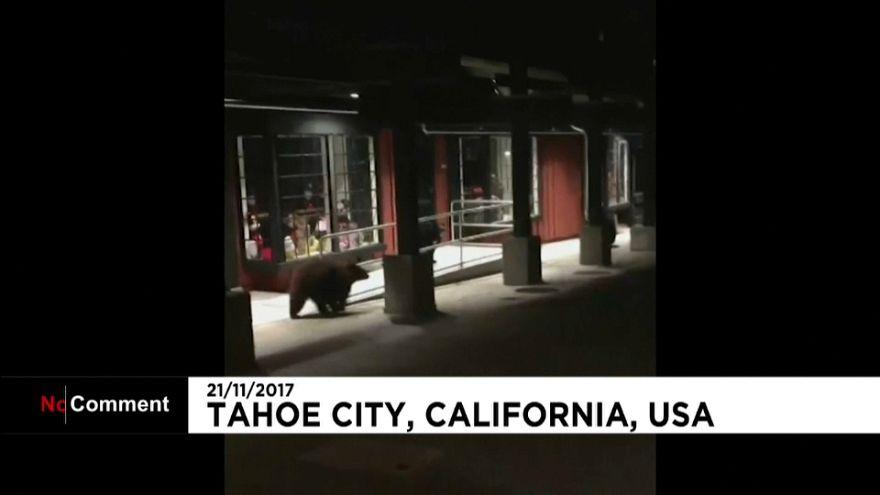 Ursos nos EUA e cães na Índia
