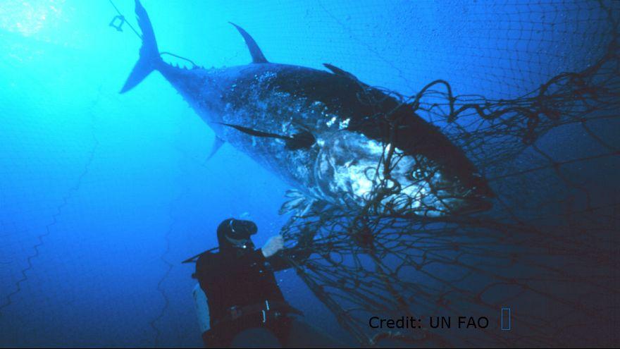 إذا كنت تحب أكل سمك التونة .. فلا تقرأ هذا التقرير