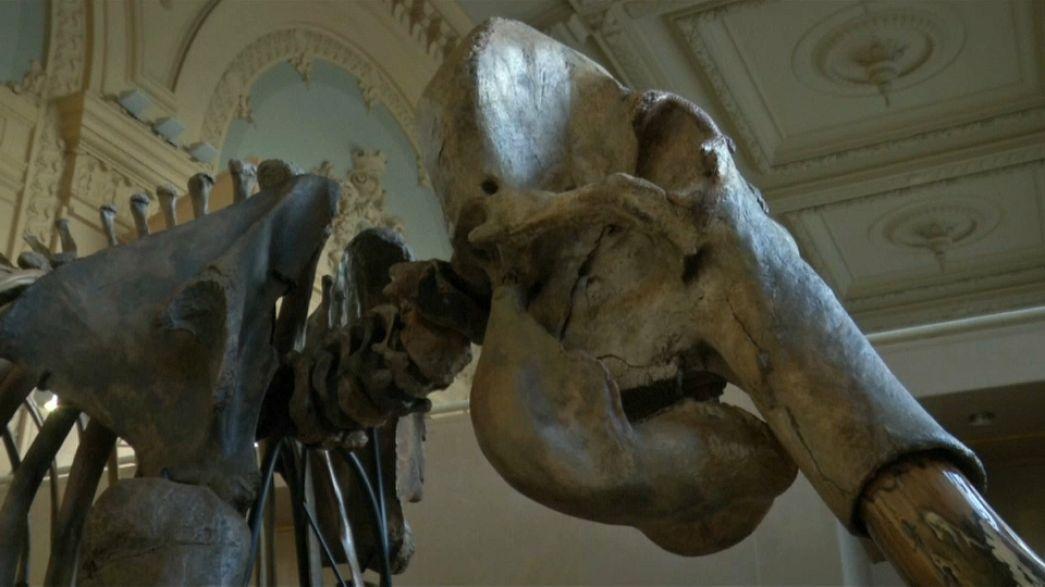 Esqueleto de mamute avaliado em mais de 400 mil euros