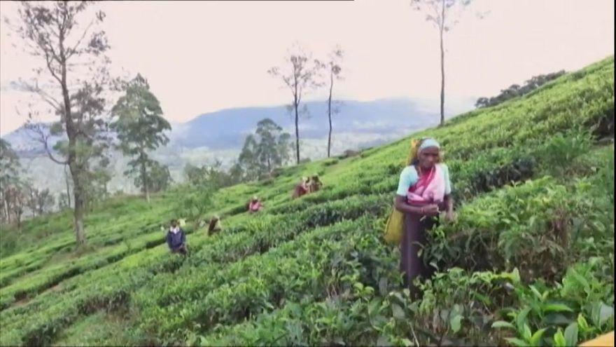 Glyphosate : l'exemple sri lankais