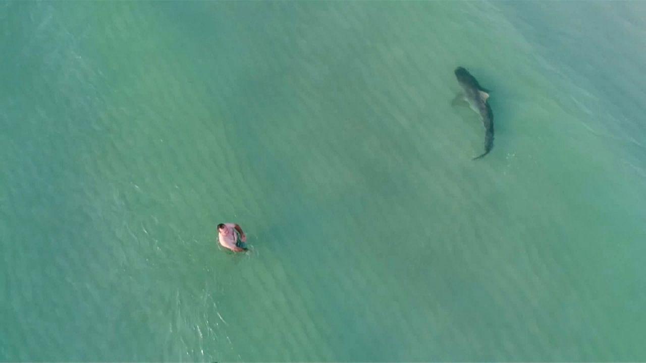 قرش يسبح بين السياح على شاطئ ميامي
