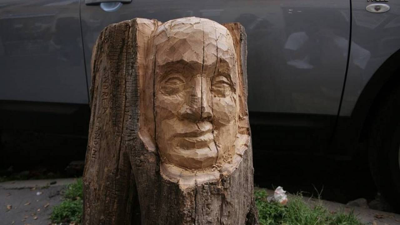 Bringing a new life to an old tree