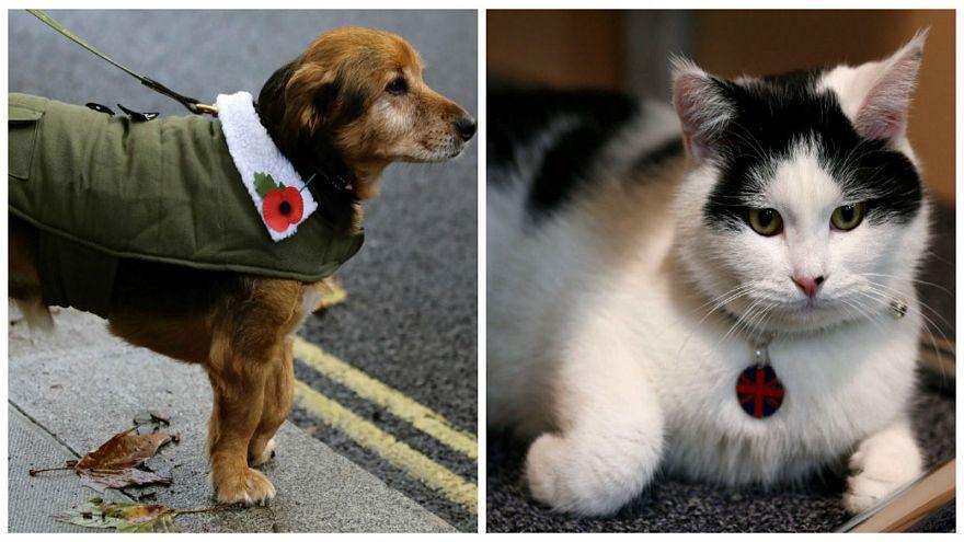 أيهما أذكى القطط أم الكلاب ؟