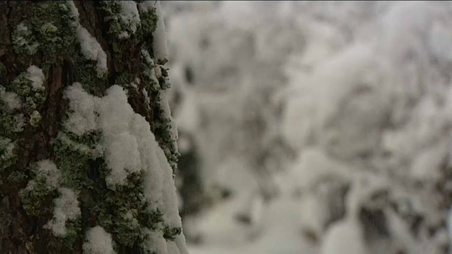 Снегопад обрушился на Польшу