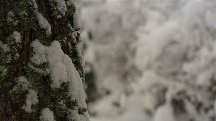 Forte nevão caiu no sul da Polónia