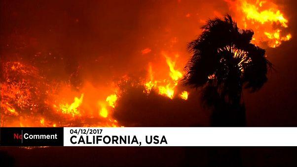 США: лесные пожары в Калифорнии