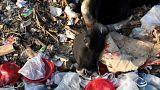 UN-Umweltgipfel will aufräumen