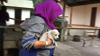 Bali: Aktivisten retten Tiere vor Vulkanausbruch