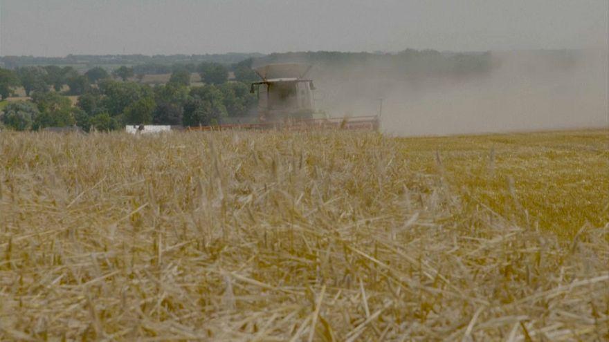 Italia: 8mila ettari per i giovani agricoltori