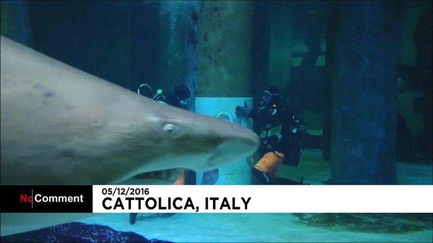 Изображение Святого семейства в аквариуме