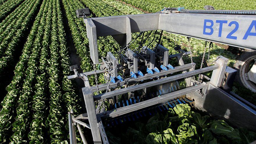 Itália vende milhares de hectares a jovens