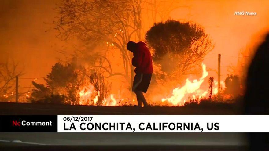 Un lapin sauvé des flammes en Californie