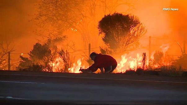 California man saves bunny from blaze