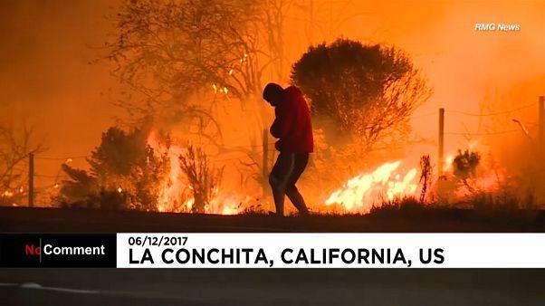 Coelho salvo das chamas