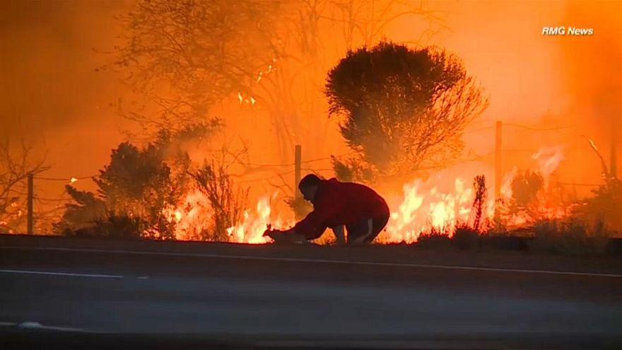 Hétköznapi hőstett - sikeres nyúlmentés a kaliforniai tűzvészben
