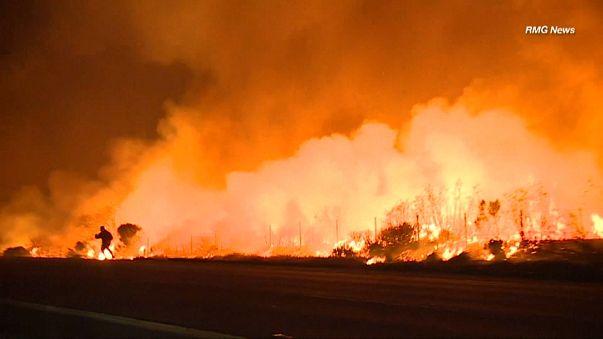 Kaliforniya yangınları vahşi hayvanları da etkiledi