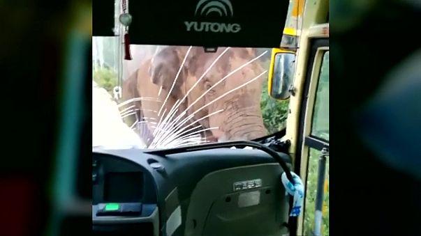 شاهد... سائق يصور من داخل حافلته لحظة هجوم فيل ضخم عليه