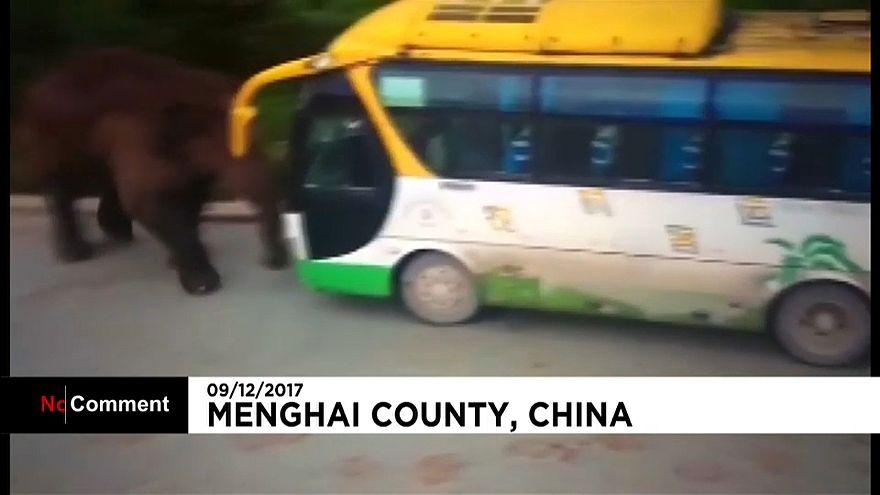 Китай: слон напал на автотранспорт