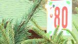 США: дорога елочка к Новому году!