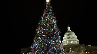 christmas tree washington