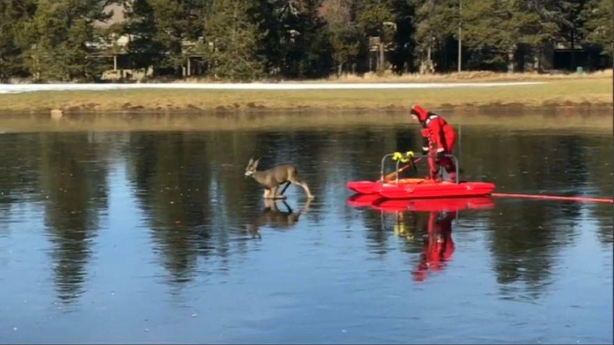 Riadt őzt mentett meg a befagyott tóról egy amerikai tűzoltó